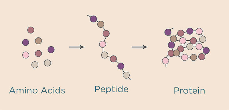 what-is-it-peptieds